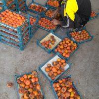 دستگاه تزریق سبد میوه فقط تک رج چهار کیلویی
